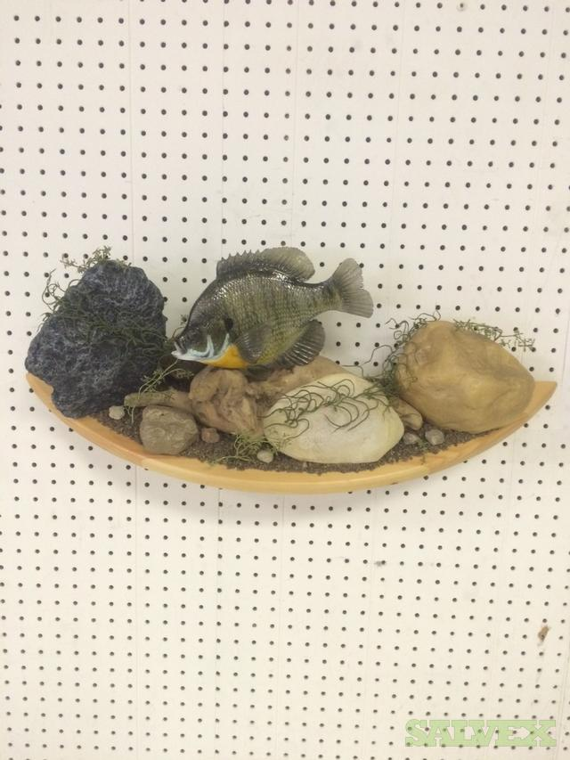 Fish Scene Wall Mounted Art: Blue Gill Driftwood Fish Replica  HQ BLG09.8 (Stunning Color Very Real)
