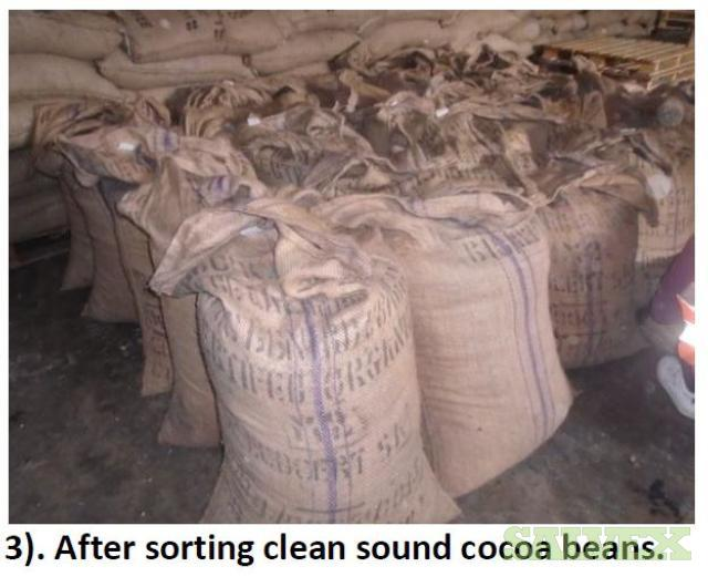 Cocoa Bags - 558kg