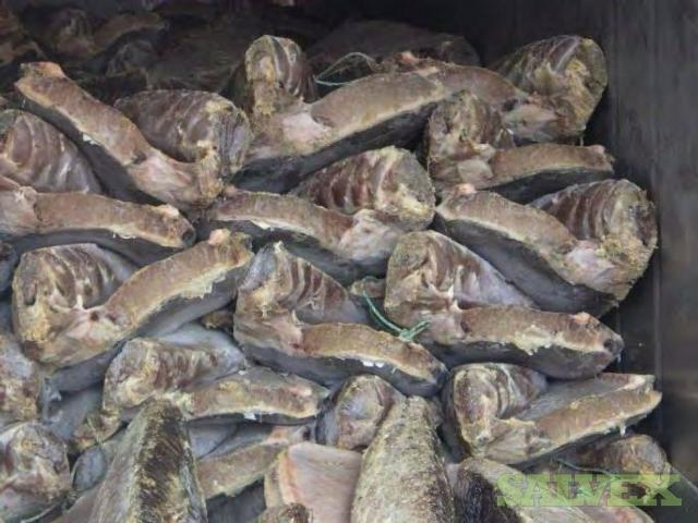 Blue-Fin Tuna in Bulk (20,400 Kgs)