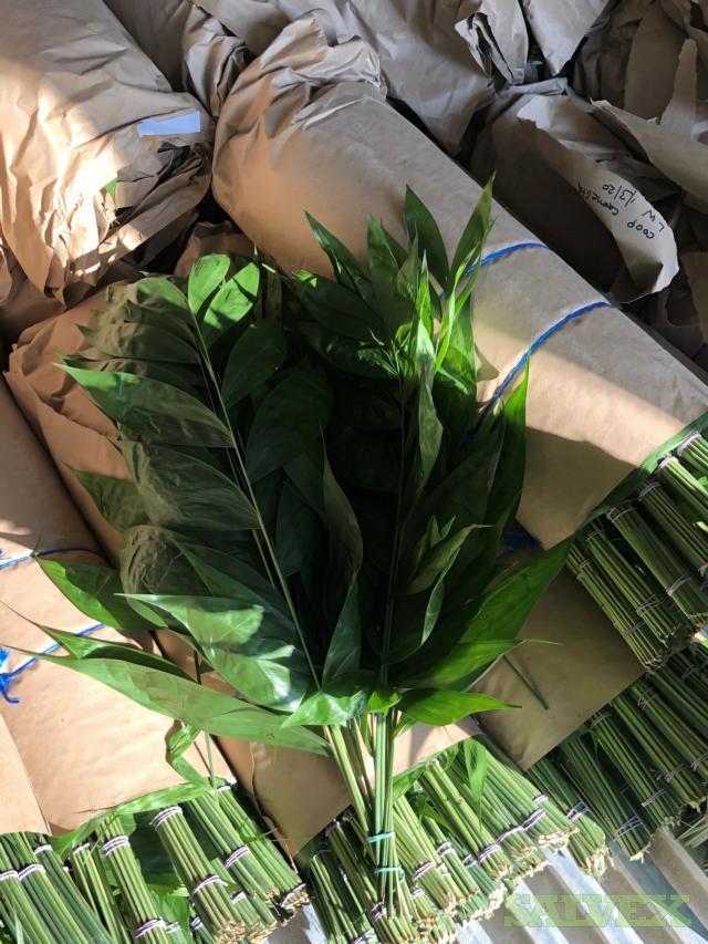 Decorative Leaf Containing Rolls -1 Truckload