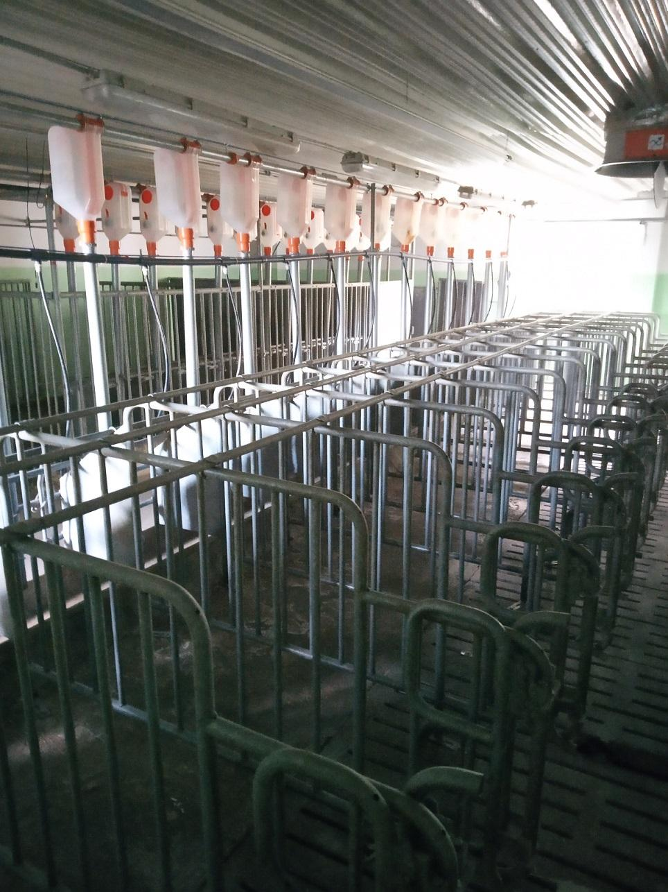 Surplus from Pig Farm in Moscow