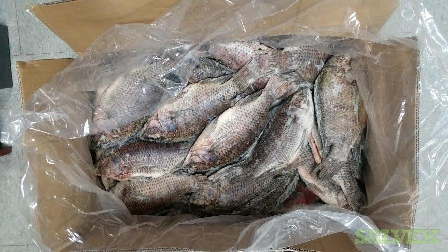 Frozen Tilapia, Tilapia Filets and Whole Catfish Gutted (1,100 Cartons / 24,100 Lbs)